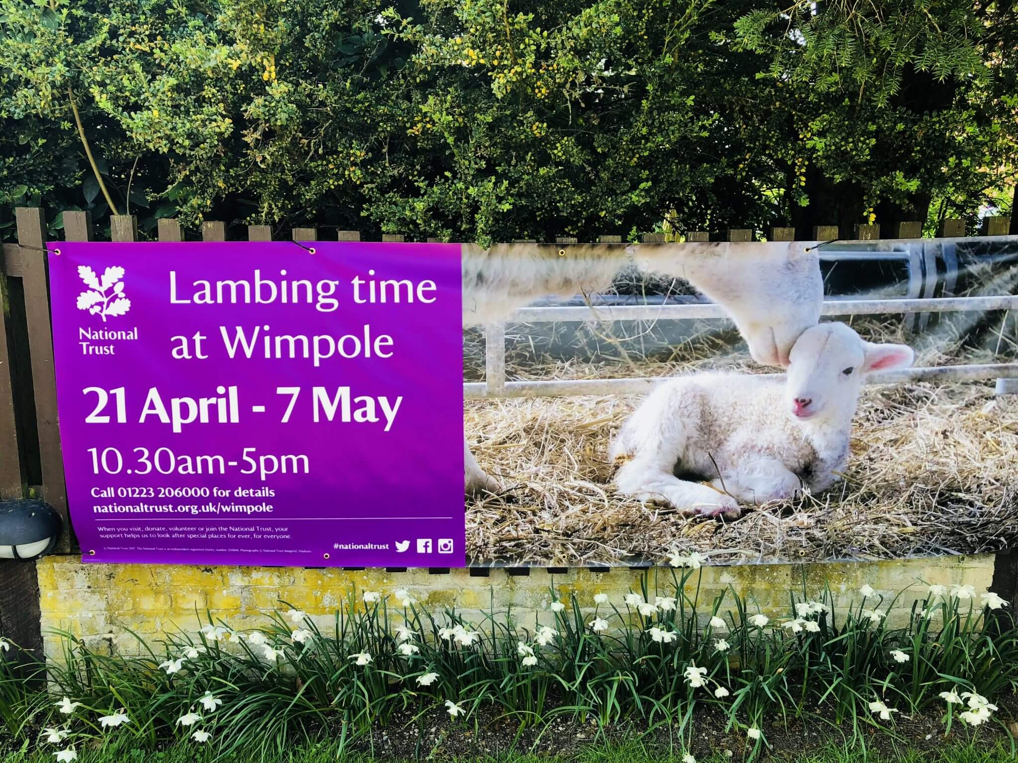 Lambing sign at Wimpole Home Farm